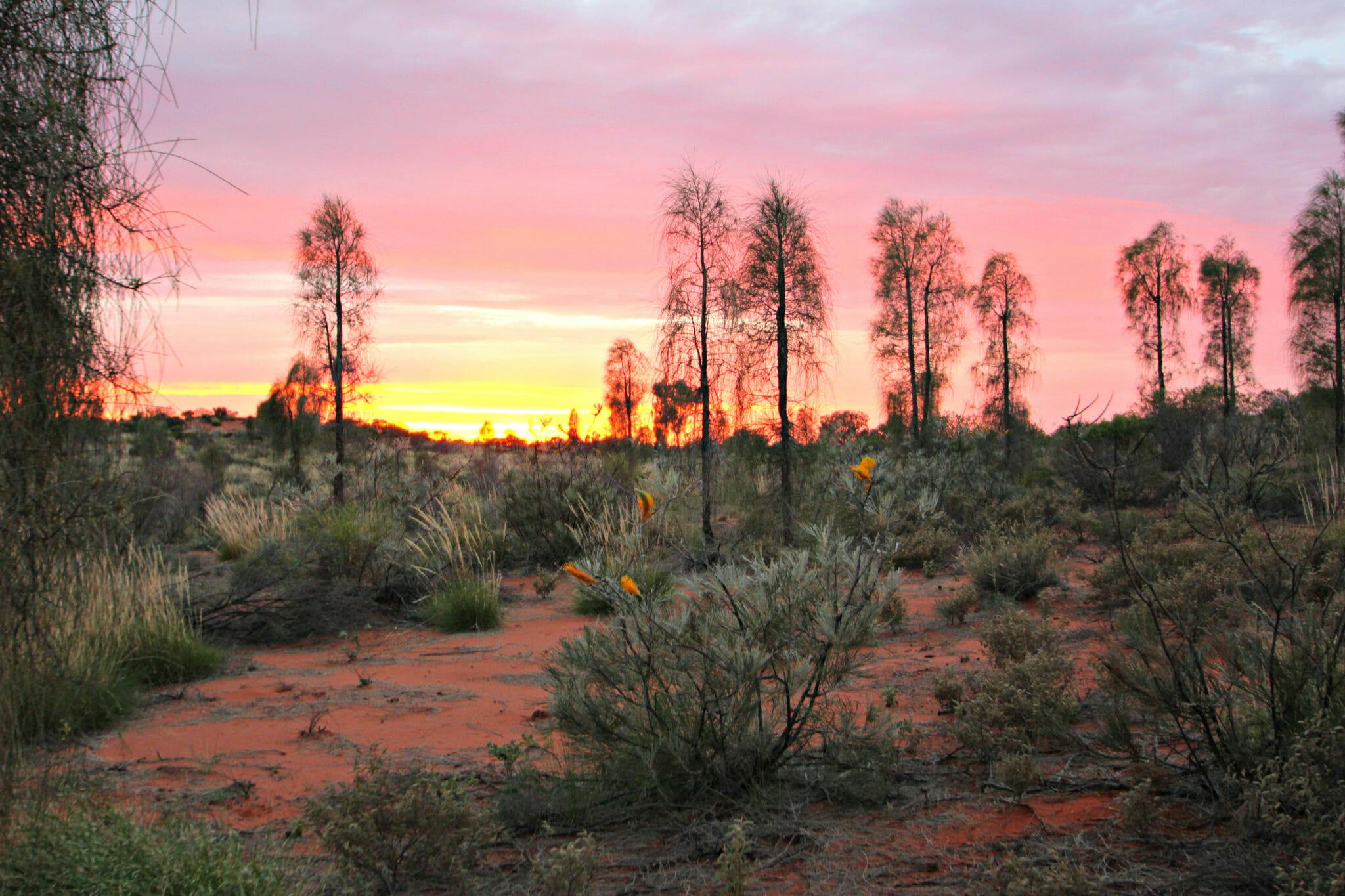 big-beautiful-sky-desert-sunrise